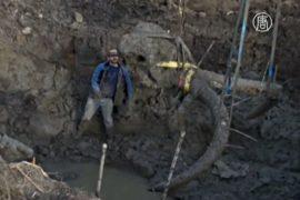 Фермер нашёл скелет мамонта на своём поле