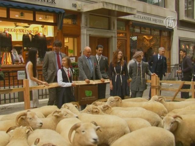 Улицу Лондона превратили в пастбище для овец