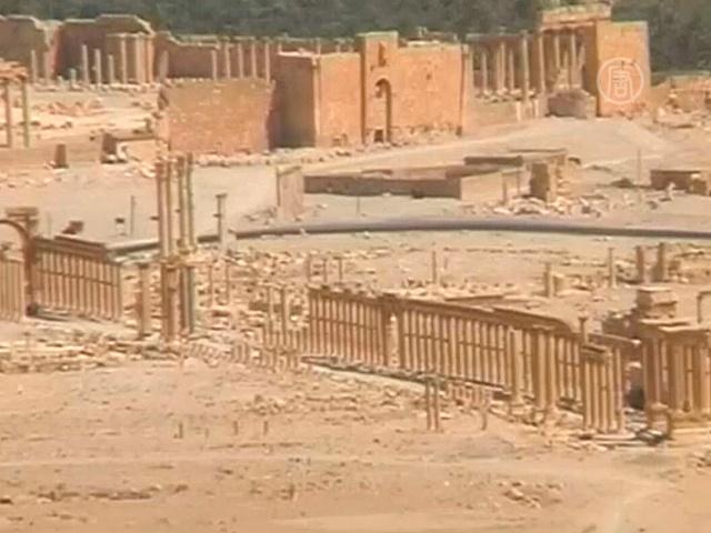 Власти Сирии призвали спасать Пальмиру совместно