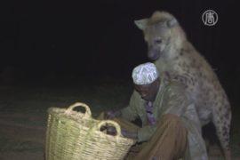 Забота о гиенах остановила их вражду с людьми