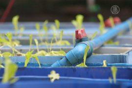 Аквапоника: огород и рыбная ферма прямо в квартире