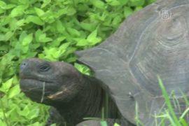 Учёные открыли новый вид галапагосской черепахи