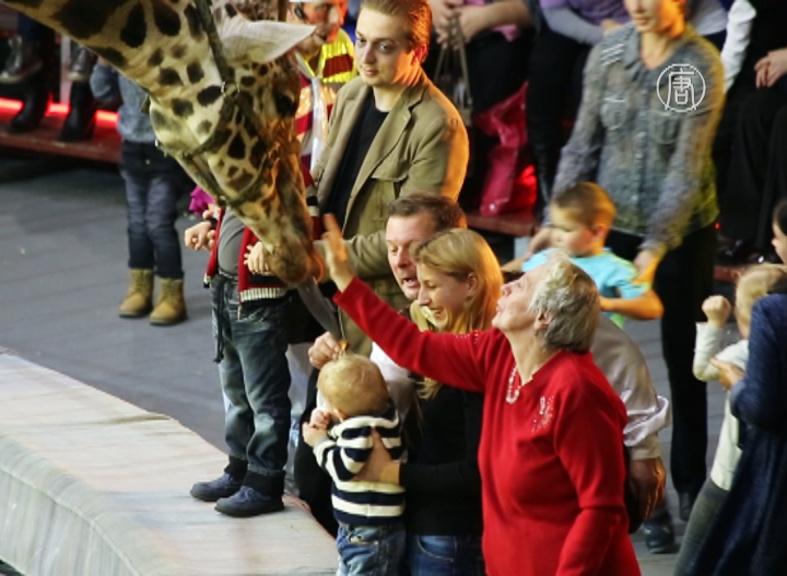 Носорог и жираф выступают на одной сцене