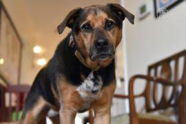 Общение с собаками помогает больным слабоумием