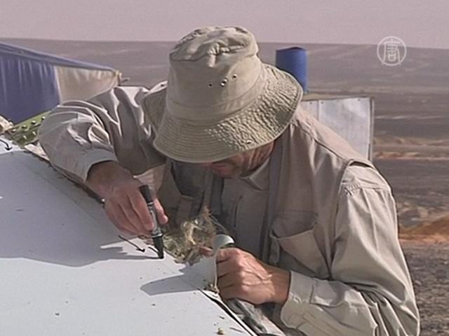 В Синайской пустыне продолжают работать эксперты