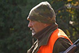 В Италии – нашествие диких кабанов