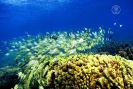 Кораллы Гавайев – под угрозой исчезновения
