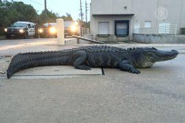 В США огромный аллигатор приполз в ТЦ