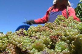 Виноделию в Чили угрожает изменение климата