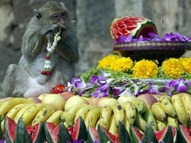Тайских макак снова накормили на тысячи долларов