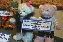 Боливия: медведи Тедди воссоздают историю