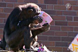 В сиднейский зоопарк уже пришло Рождество