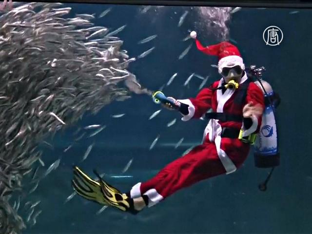 Дрессированные сардины и скат в шоу Санта-Клауса