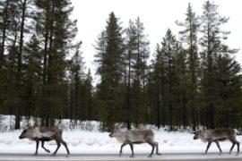 Лапландия ждёт туристов из Азии