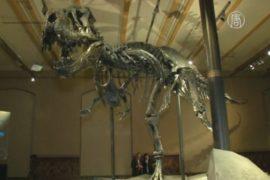 В берлинском музее выставили скелет тираннозавра