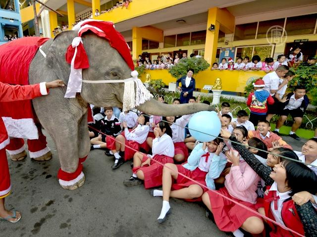 Слоны-Санты раздавали детям подарки