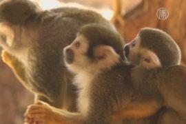Обезьян чествуют в южнокорейском зоопарке