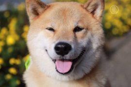 Японский пёс стал звездой Instagram