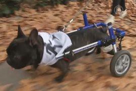 По Мадриду пробежались с собаками ради гуманности