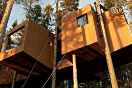 Швеция: в лесу расположился отель на деревьях