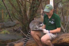 В Лондонском зоопарке пересчитывают животных
