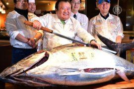 Токио: голубого тунца продали за $117 тысяч