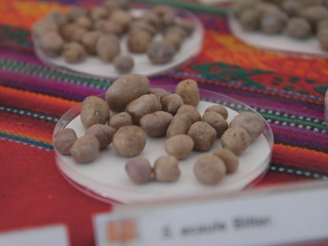 Картофель – главная пища индейцев из Перу