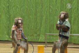 Корейцы смотрят обезьянье шоу на удачу