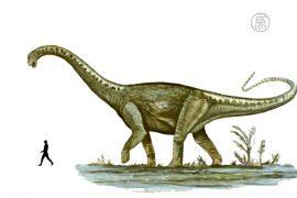 В Аргентине описали новый вид динозавра-гиганта