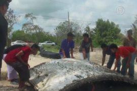 В Таиланде изучат найденный обломок самолёта