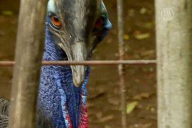 Приют спасает диких животных в Индонезии