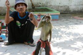 В Индонезии обезьян спасают от жестокого обращения