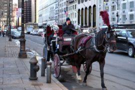 Конные экипажи в Нью-Йорке не будут запрещать
