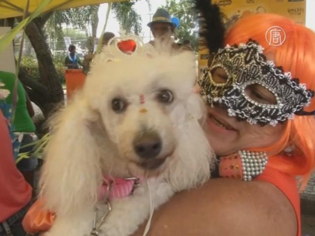 «Собачий карнавал» состоялся в Рио-де-Жанейро