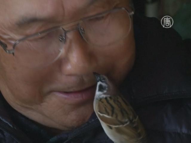 Воробей поселился дома у японской семьи