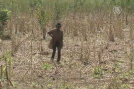 Гаити грозит голод из-за засухи