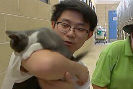 Австралийцев призывают не выбрасывать котят