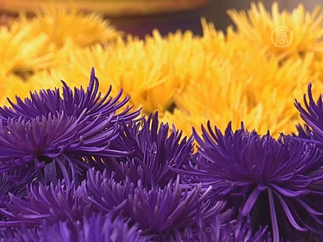 Колумбия: миллионы цветов ко Дню святого Валентина