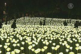 25 тысяч светящихся роз расцвели в Гонконге