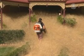 Сушеные сорняки захватили городок в Австралии