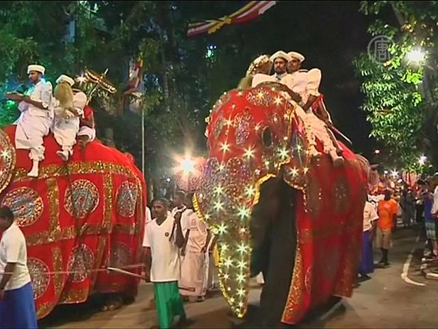 Шри-Ланка: красочный парад со слонами