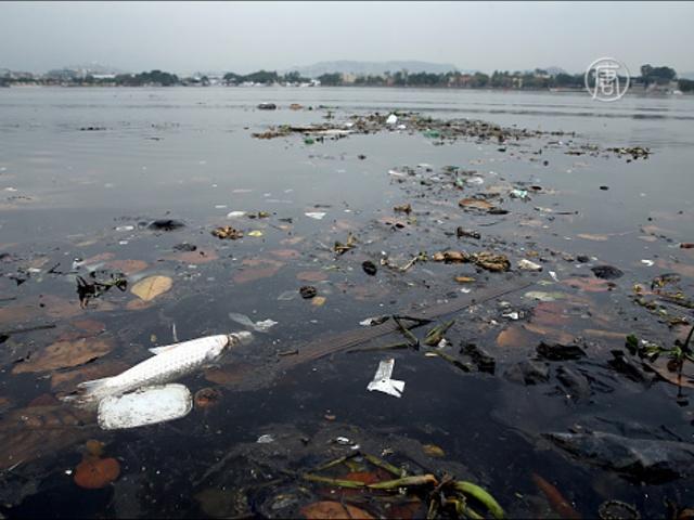В Рио требуют очистить залив Гуанабара от грязи