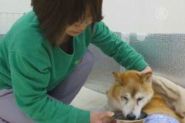 В Японии работает дом престарелых для собак