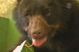Очкового медведя спасли от мучителей