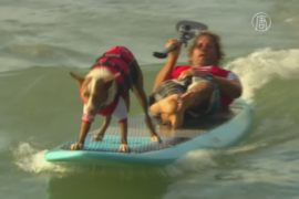 Австралийские сёрфингисты взяли собак на доску