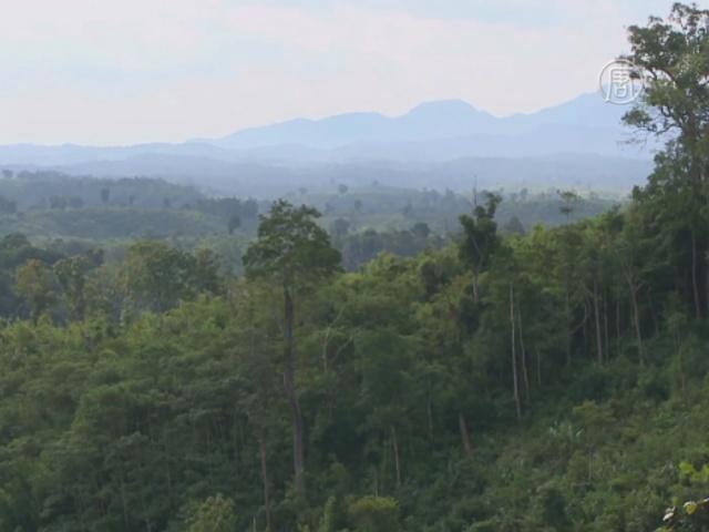 ООН помогла Лаосу спасти лавровые деревья