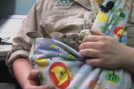 Сотрудница зоопарка стала мамой для кенгуру-сироты
