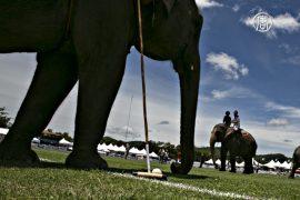 Таиланд: Королевский кубок по поло на слонах
