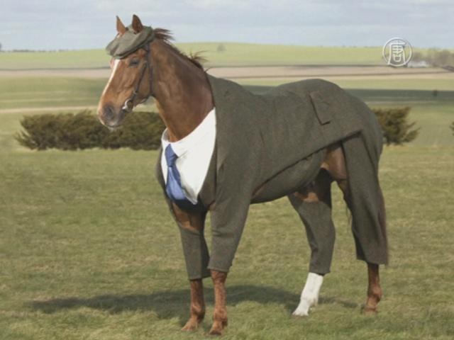 Коню сшили твидовый костюм