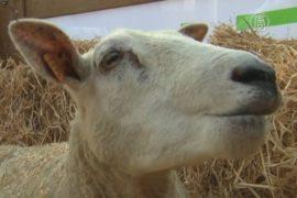 Еврокомиссия объявила о новой помощи фермерам